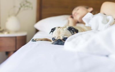 Haustiere im Bett