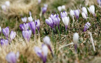 Frühjahrsmüdigkeit – Einbildung oder Realität?